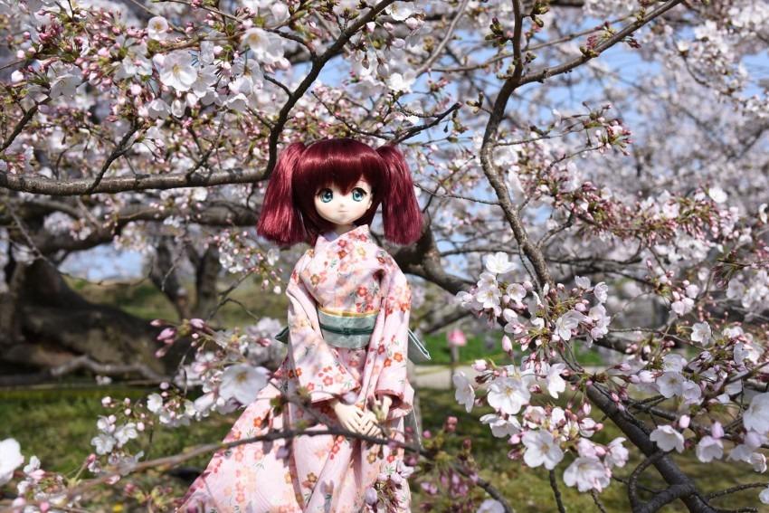 桜とルビィ