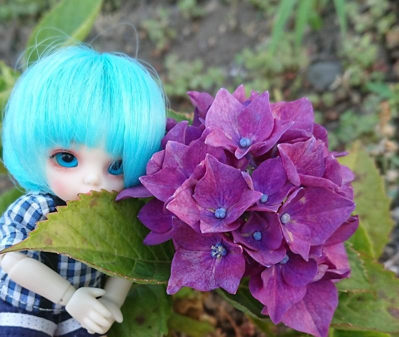 6月 紫陽花